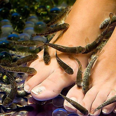 "Fish pedicure ""cava&sweet"" - Lleida"