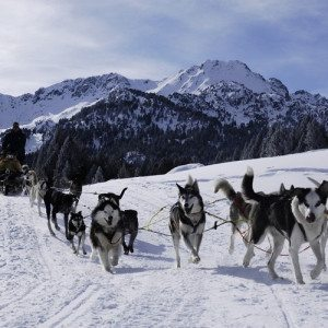 "Conduce un trineo -""Mushing"" en los Pirineos"